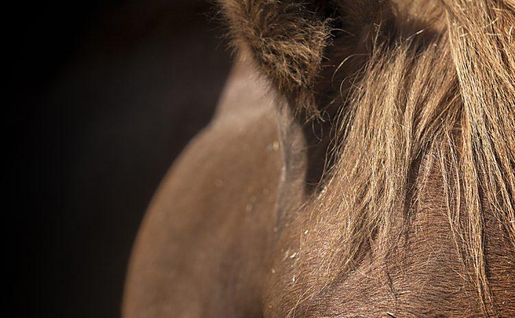 Horses 030719